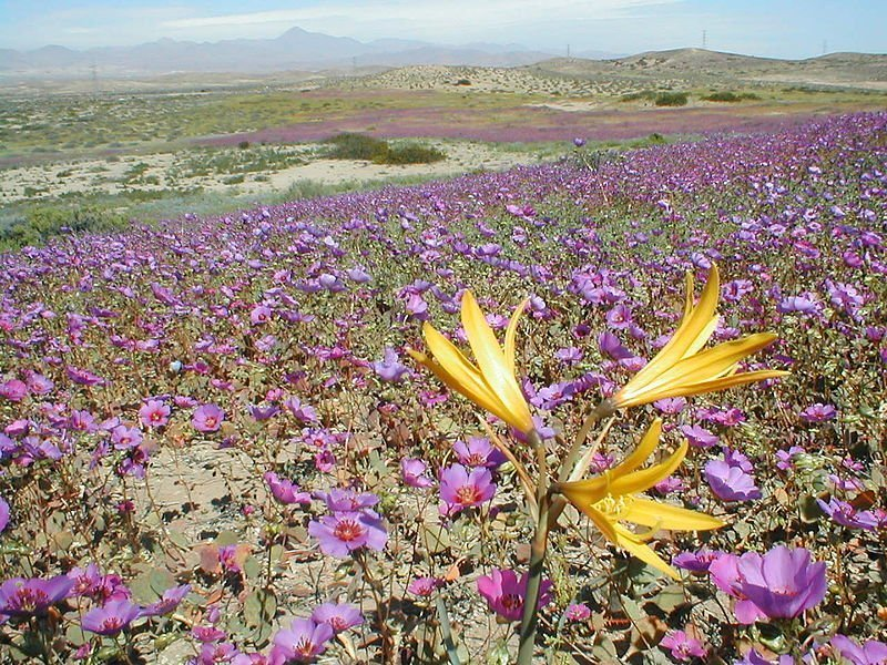 Desierto Florido - Cabañas en la region de Atacama