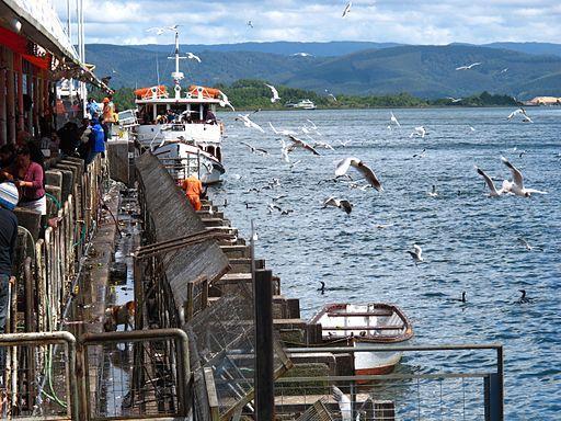 cabañas en Valdivia
